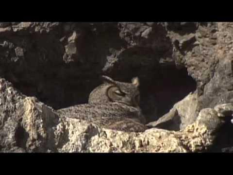 Natural Wonders of the Klamath Basin Wildlife Refuges