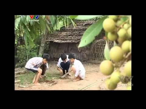 Ký ức miền tây Kỳ 177 Bắt cá Bống dừa vtvcantho vn