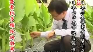 網路熱門影片分享_薑黃的功用_【觀念課站】