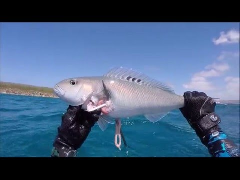 Spearfishing Guam 2016