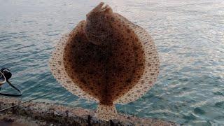 Разведка на камбалу приносит результатыcatching Flounder On The Black Sea