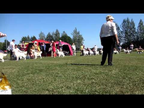 FI Main Speciality Championship Show Helsinki 06.08.2014 - Golden Retriever