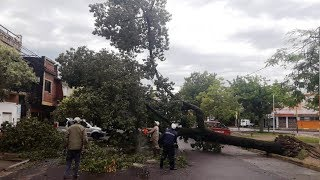 Árbol cayó y obstruyó totalmente la calle Sarmiento