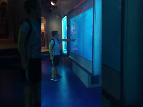 Gage's reaction at the interactive exhibit, at the spy museum in a Washington DC