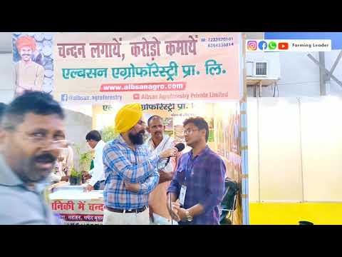 चंदन की खेती की कैसे करें|Chandan Tree Farming|Sandalwood in india|Hindi