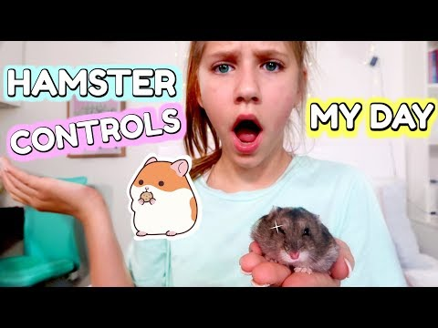 Hamster Controls My Life!
