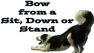 Bow From Different Positions - Clicker Dog Training