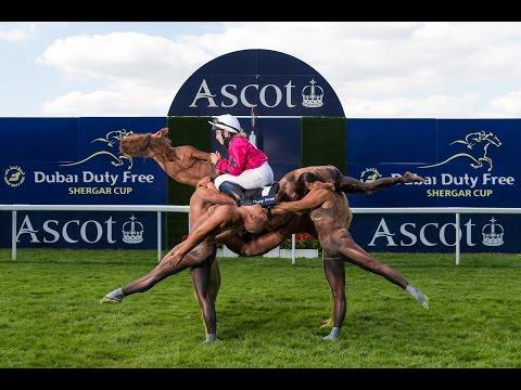 Shergar Cup Human Horse