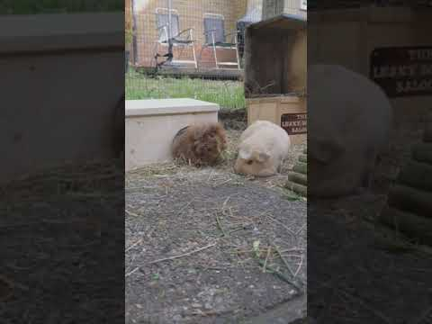 10 seconds in the life of the Surrey Squeakers