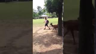 Feeding some deer. Nara Park, Japan