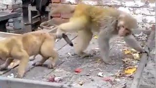 Cuộc Chiến Siêu Kịch Tính Hài Hước Giữa Khỉ & Chó