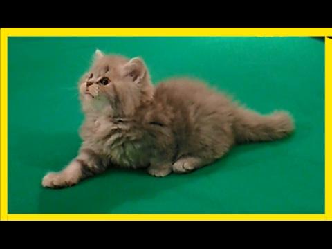 Прелестные рыжие котята для солнечного настроения - YouTube