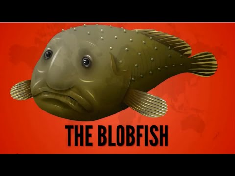 15 Essential Blobfish Facts - All You Need to Know - YouTube