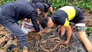 Đào Tổ Lươn Đồng Béo Ngậy Sau Sườn Nhà Mấy Chục Năm Không Biết   Catching Eel From Mud