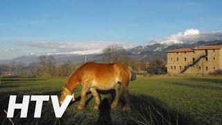 Cal Trisca, Casa rural en Bellver de Cerdanya