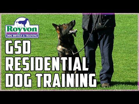 General German Shepherd training at Royvon