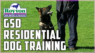 Complete German Shepherd Residential Dog Training At Royvon