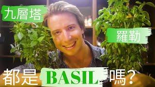 ????九層塔英文怎麼說? 羅勒呢? 都是BASIL嗎?????口味測試大PK!Basil, Taiwanese Basil, Thai Basil, Sweet Basil, 等英文美食 ~