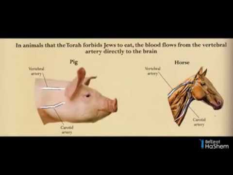 Divine Knowledge In The Torah: Kosher Animal Secrets (3 minutes)