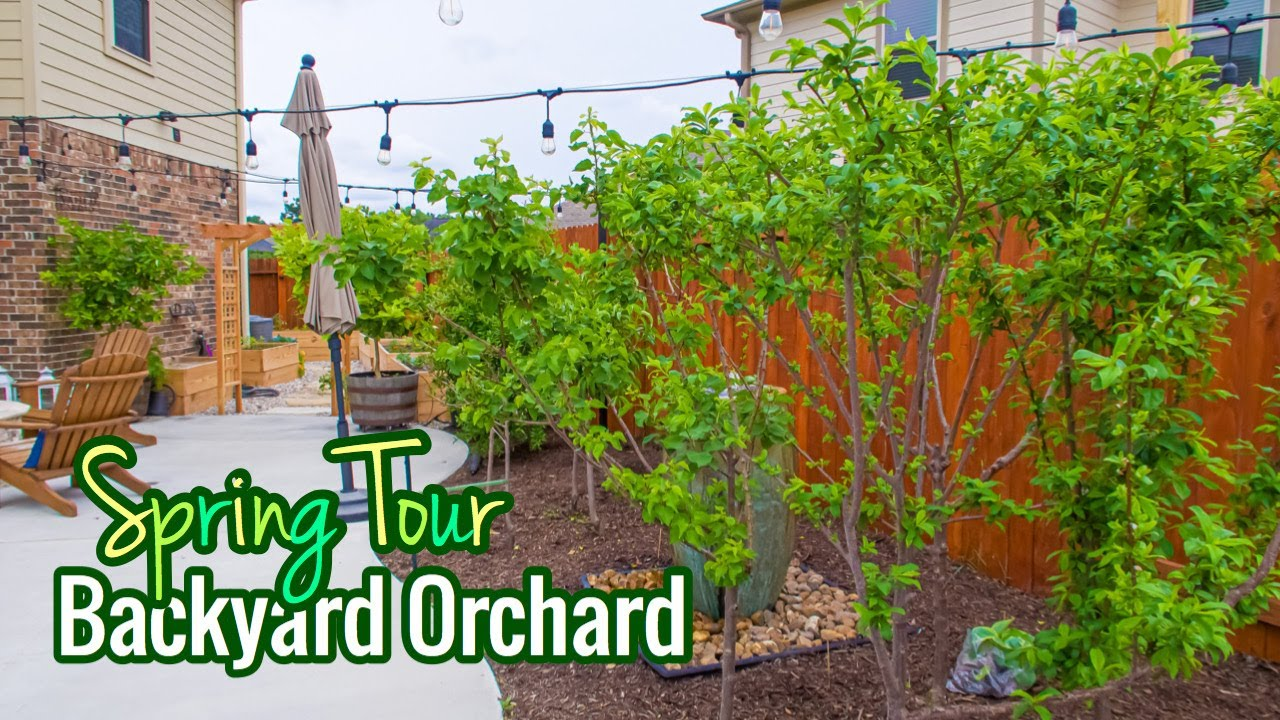 Backyard Orchard / Spring Tour / Over 30 Fruit Trees ...