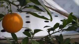 How to Build Grow Raft Hydroponics System (No Air Pump)