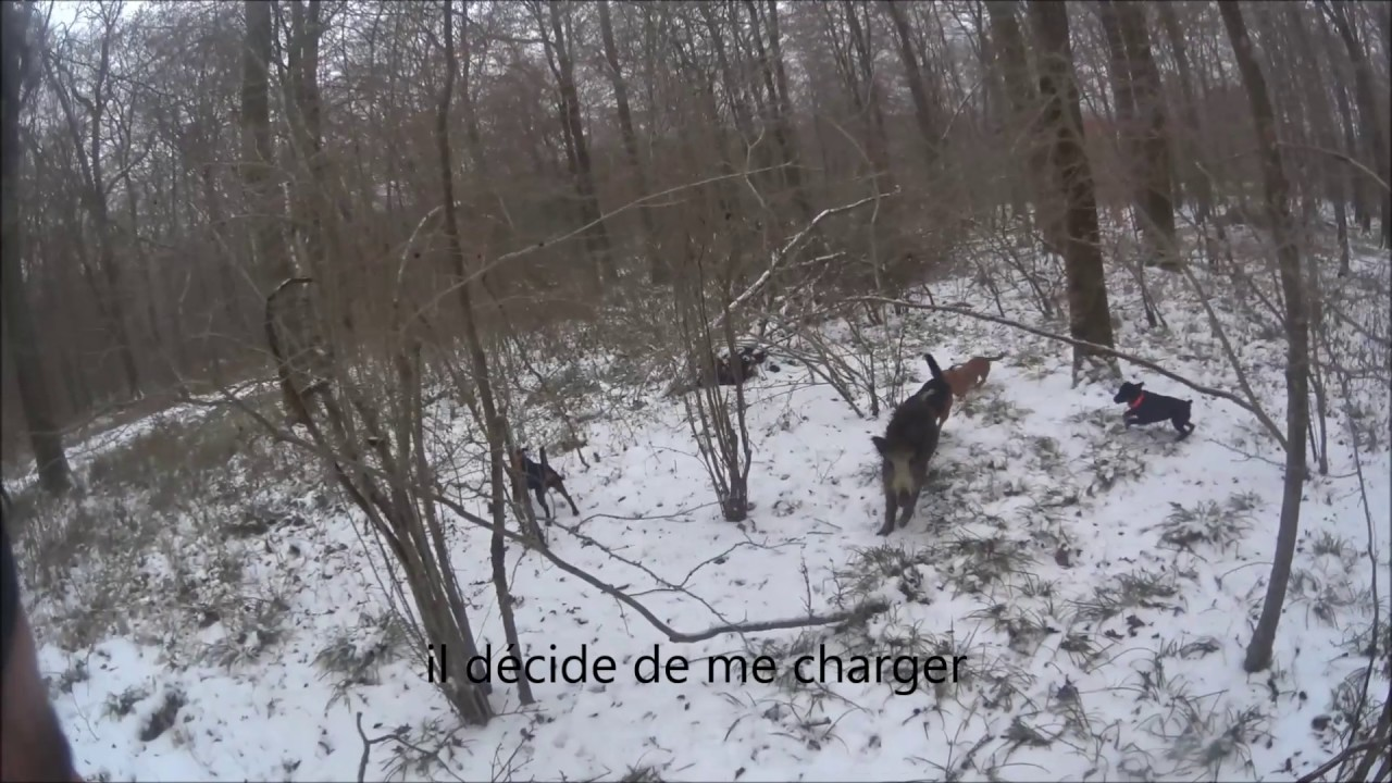 Sanglier au ferme (2016-2017) - YouTube