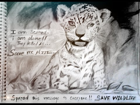 Poster on wildlife conservation  |save wildlife posters with slogan|