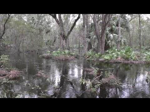 HURRICANE IRMA AFTERMATH (Green Swamp)