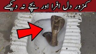June 20, 2021 | سانپ | साँप |  Snake Viral Video | Saanp | King Cobra Snake In Bathroom Toilet