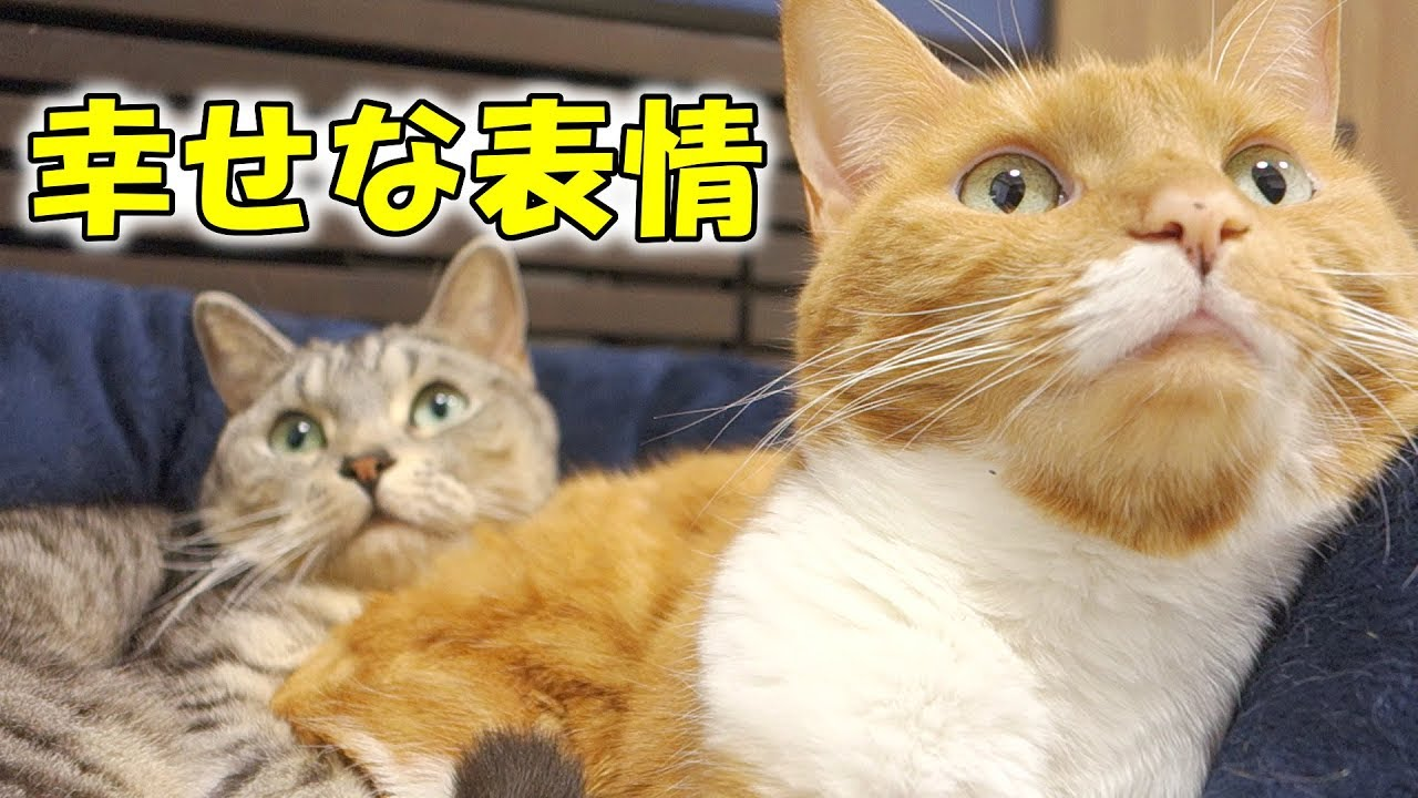 Cute cats with cute muzzle making happy face youtube cute cats with cute muzzle making happy face voltagebd Images