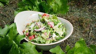 Leichte Sommer Küche Rezepte : Tomatendressing low fat rezept leichte sommerküche