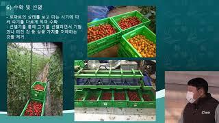 [경기도 친환경 대추방울토마토(유기농) 재배기술 교육]…