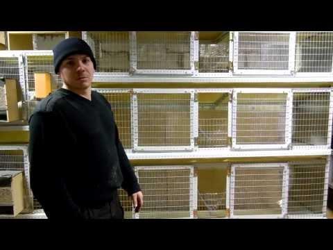 клетки для кроликов своими руками-3