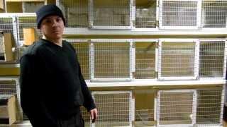 видео клетки для кроликов