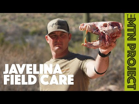 Field Care For A Javelina - The Mountain Project