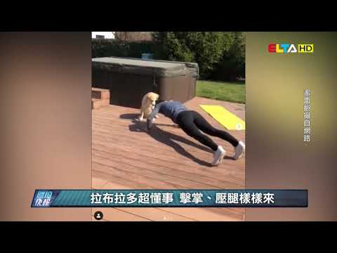 愛爾達電視20200419│【犬派必看】最萌陪練員! 排球狗狗改玩足球