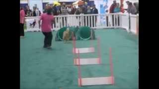 Pet Expo 2015-woofjocks race