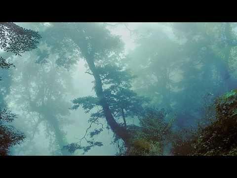 """孫清松、吳金黛 - 藍色之門《鳥2 天籟所在的地方》/ Sun Ching-sung, Judy Wu - The Blue Gate """" Birds II"""""""