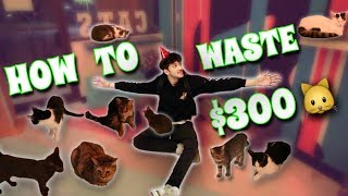 $200 PRIVATE CAT PARTY!