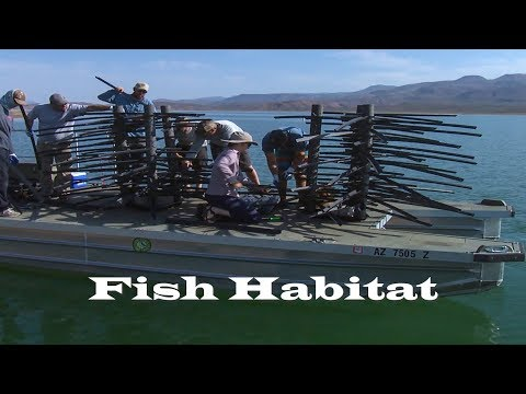 Fish Habitat In Roosevelt Lake
