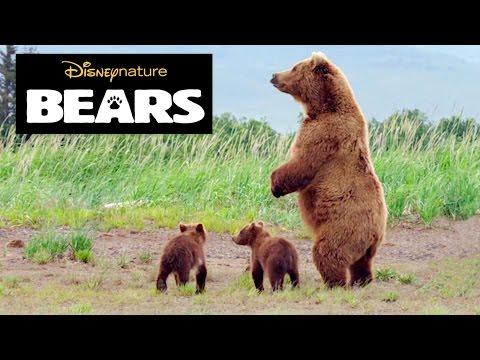 Disneynature Bears   Brown Bear Facts