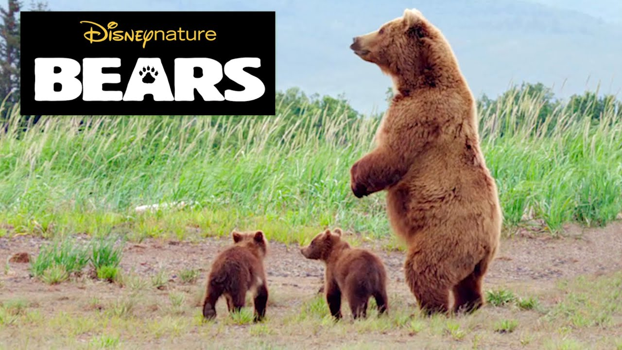 Disneynature Bears | Brown Bear Facts - YouTube