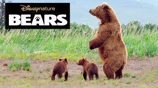 Kijk Bear facts (engels) filmpje