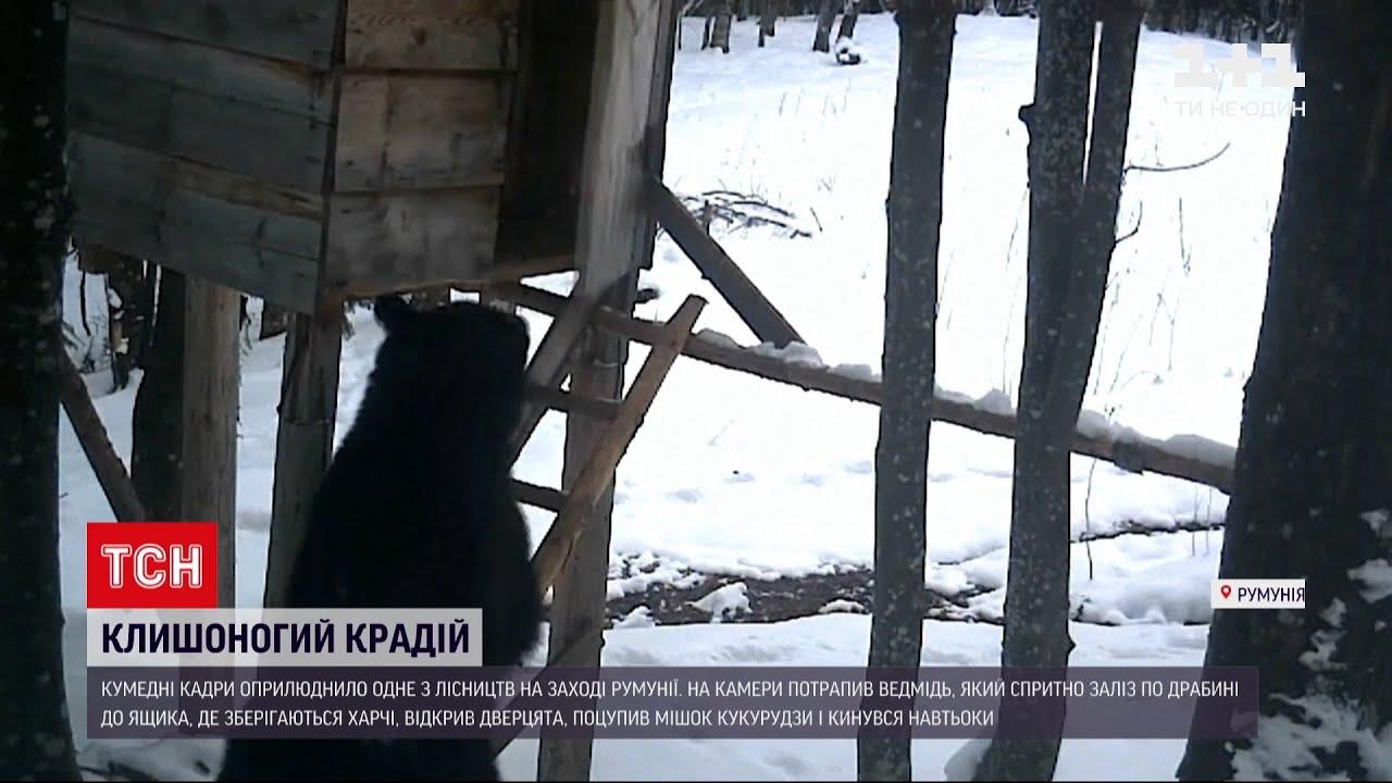 Новини світу: у Румунії молодий ведмідь поцупив мішок кукурудзи