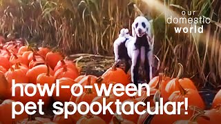 Howl-O-Ween Pet Spooktacular | Our Domestic World