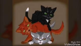 Фото котов воителей