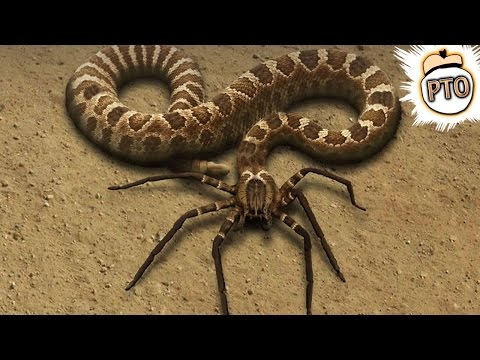 10 Crazy Animal Hybrids That Actually Exist