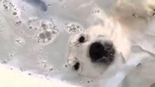 Hund liebt Schaumbad!