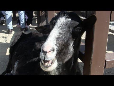 京都市動物園 水鳥と山羊 Kyoto City Zoo Waterfowl and Goat
