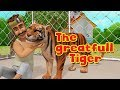 The Grateful Tiger | Moral Stories for Kids in English | Infobells
